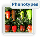 Phenotypes and QTLs